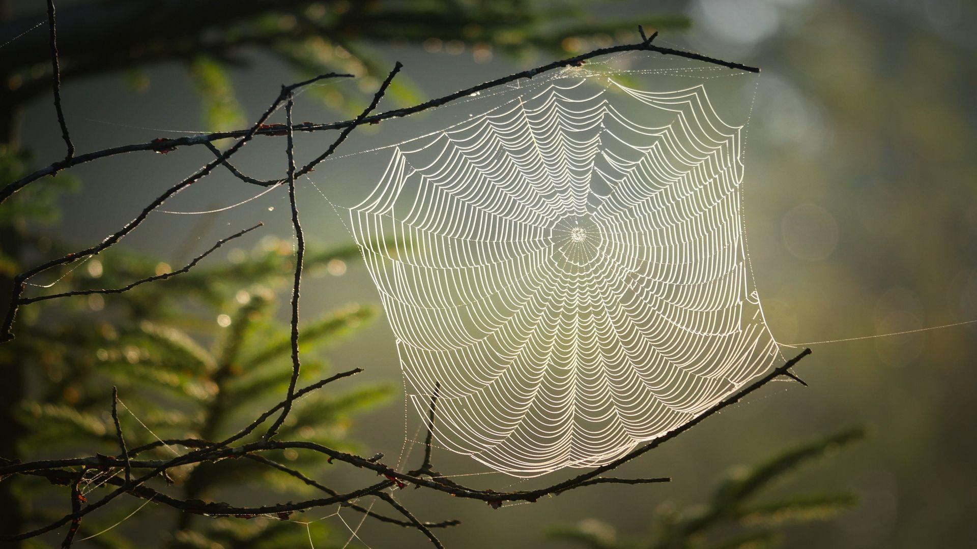 Pók vagyok hálómban